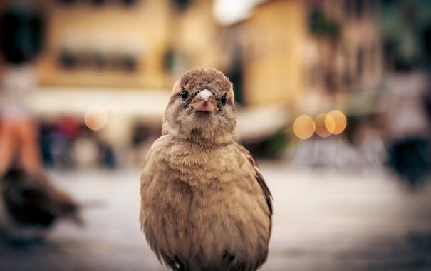 Фото обои макро, фон, птица