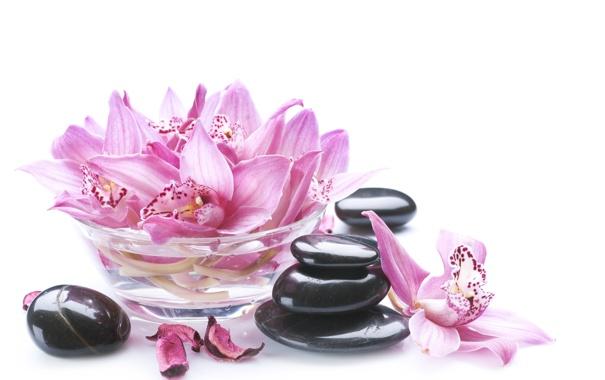 Фото обои лепестки, миска, орхидея, Orchid, petals, bowl, спа камни