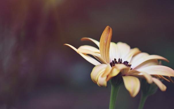 Фото обои цветок, макро, лепестки