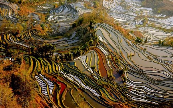 Фото обои поля, Китай, вид сверху, плантации, Yunnan