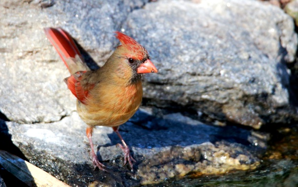 Фото обои птица, камень, цвет, перья, клюв