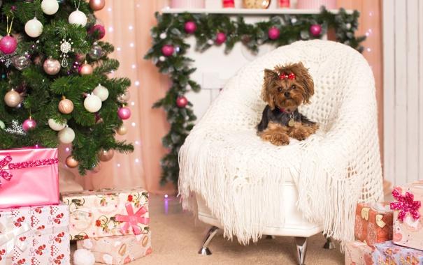 Фото обои праздник, елка, новый год, кресло, бантик, йоркширский терьер