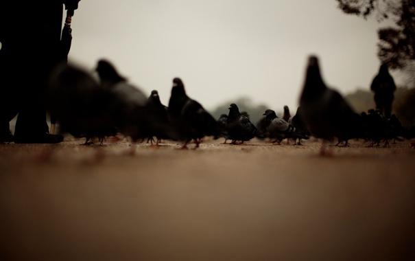 Фото обои дорога, люди, фокус, голуби, резкость