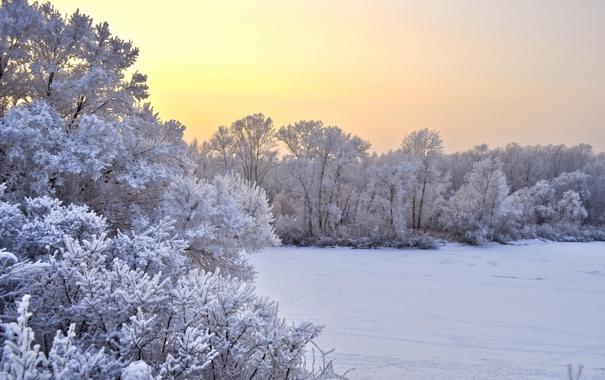 Фото обои зима, поле, снег, деревья, пейзаж, закат, природа