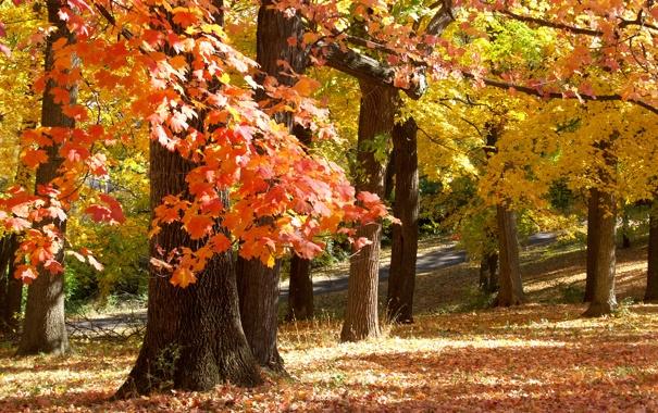 Фото обои осень, парк, November in Missouri