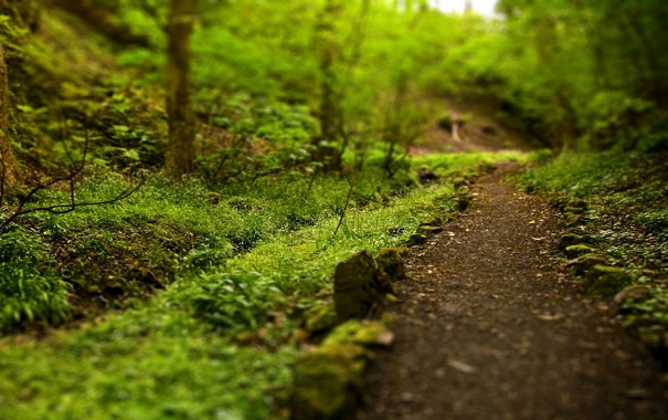 Фото обои зелень, лето, тропинка, каменное ограждение