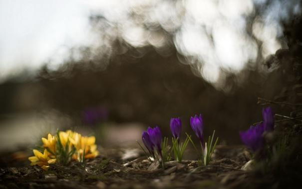 Фото обои цветы, природа, весна