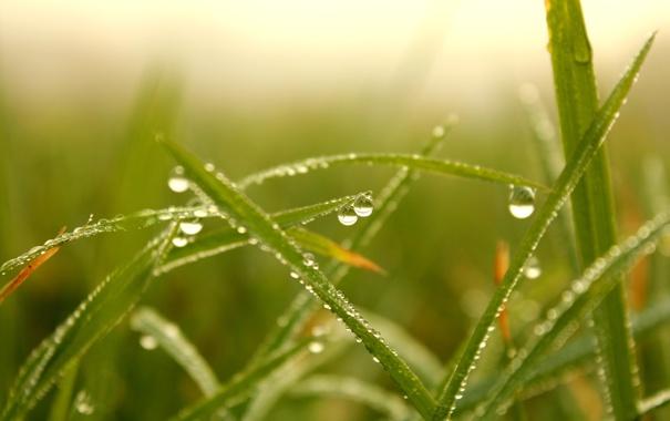 Фото обои осень, трава, утро, Роса