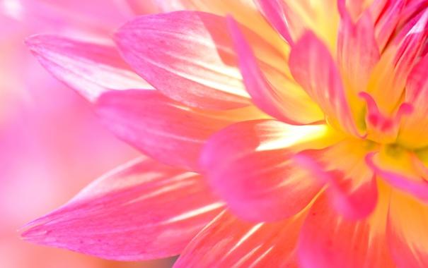 Фото обои природа, цветок, растение, лепестки
