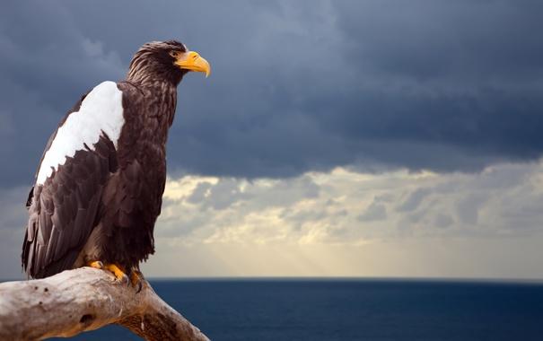 Фото обои море, небо, тучи, птица, ветка, горизонт, Орел