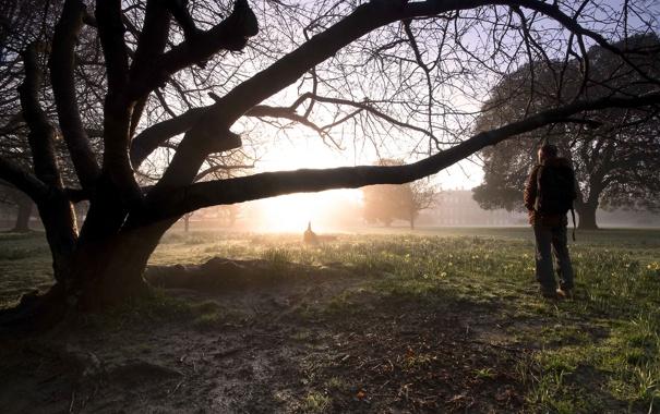 Фото обои природа, дерево, человек, Glow