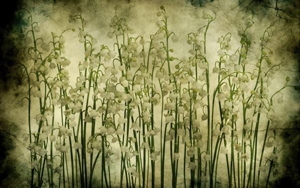 Фото обои цветы, текстура, Гранж, ландыши, ландыш