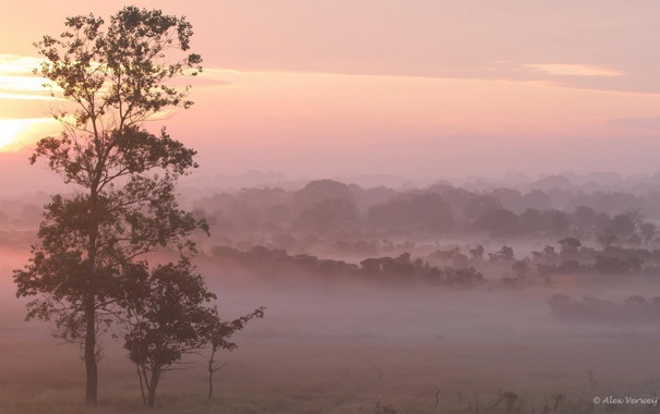 Фото обои поле, пейзаж, природа, туман, дерево, утро