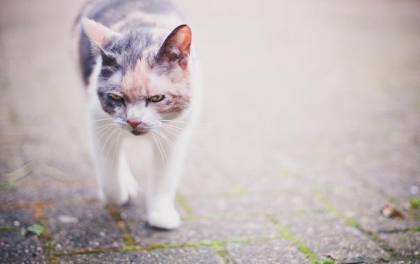 Фото обои кошка, фон, прогулка