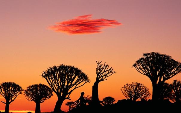 Фото обои небо, деревья, закат, облако, силуэт