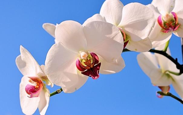 Фото обои экзотика, ветка, орхидеи