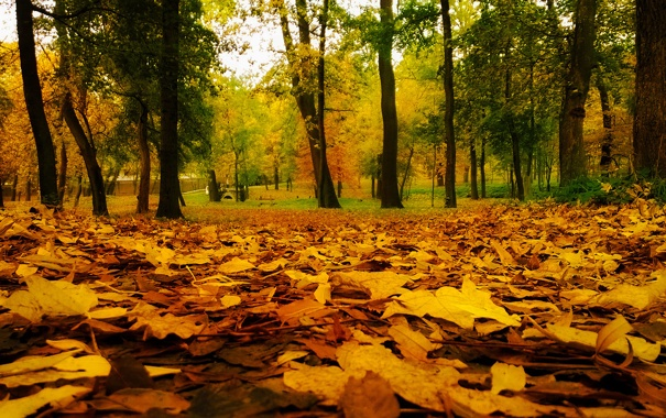 Фото обои green, red, yellow, wood, autumn, leaf
