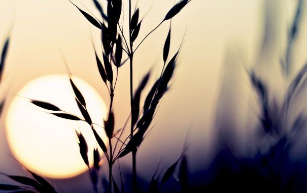 Фото обои небо, солнце, макро, закат, природа, растение, цвет