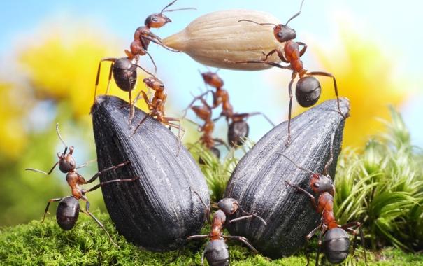 Фото обои лето, трава, макро, насекомые, работа, ситуация, муравьи