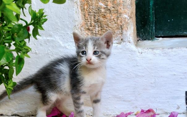 Фото обои лето, глаза, взгляд, котенок, фон