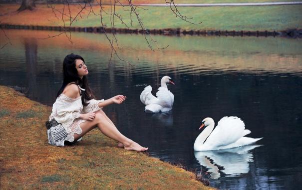 Фото обои девушка, поза, озеро, сидит, лебеди