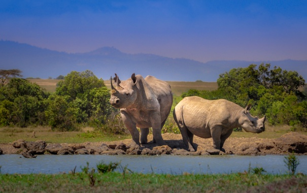 Фото обои пейзаж, горы, носорог, африка
