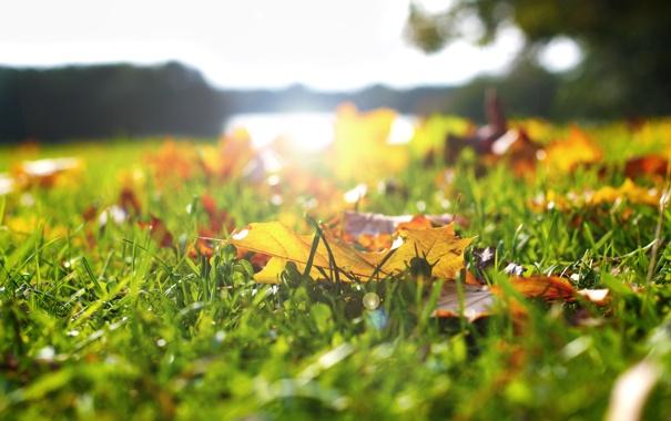 Фото обои зелень, осень, трава, листья, солнце, размытость