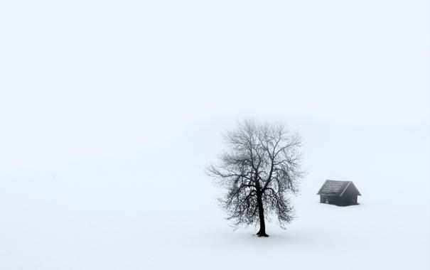 Дом дерево туман пейзаж обои фото