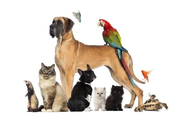 Фото обои собаки, кот, птицы, звери, черепаха, улитка, попугай