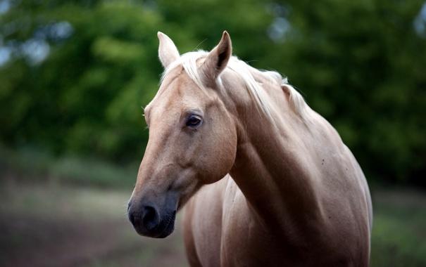 Фото обои природа, конь, красота