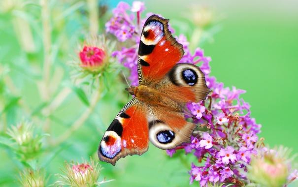 Фото обои цветы, бабочка, краски, крылья, растения, окрас, яркость