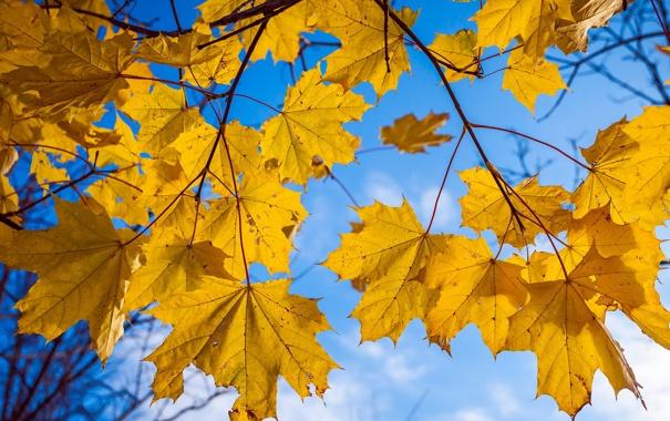 Фото обои небо, листья, природа
