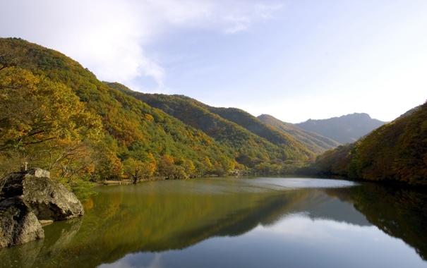 Фото обои зелень, лес, небо, вода, облака, деревья, пейзаж