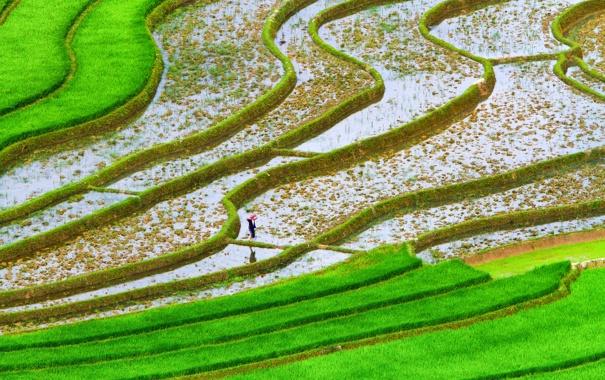Фото обои зелень, вода, поля, плантации