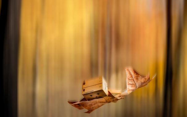 Фото обои лист, коробка, падение, amazon