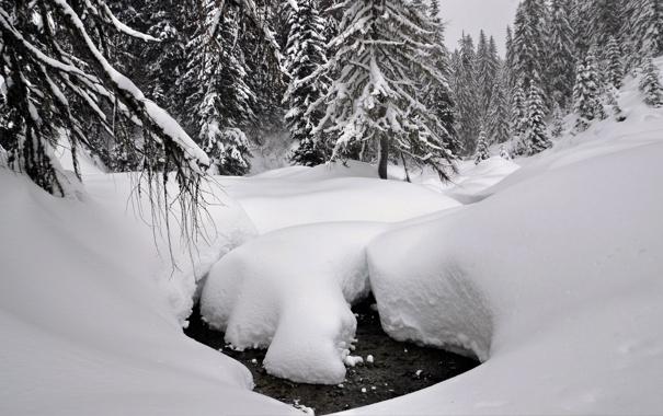 Фото обои зима, лес, вода, снег, деревья, ручей, сугробы
