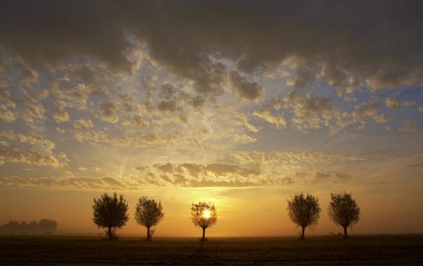 Фото обои закат, поле, небо, деревья