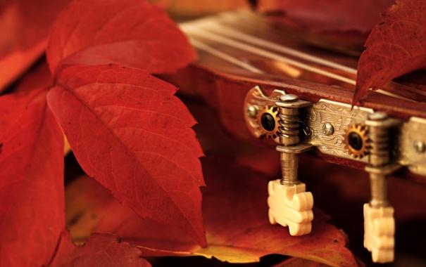 Фото обои листья, макро, гитара
