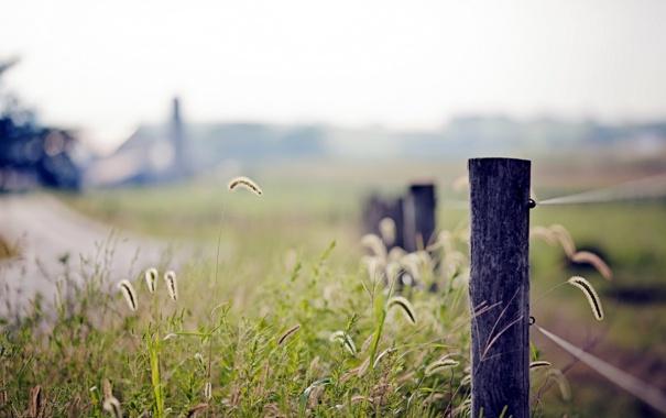 Фото обои трава, макро, природа, забор