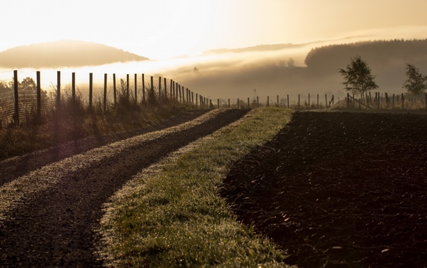 Фото обои поле, пейзаж, туман, утро