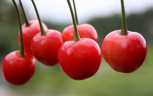 Фото обои красные, вишни, черешни