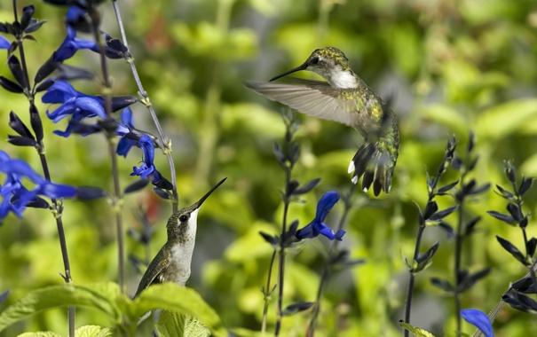 Фото обои лето, цветы, птицы