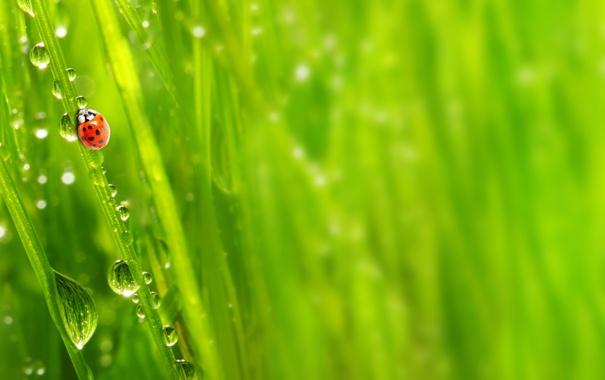 Фото обои зелень, трава, капли, макро, природа, роса, утро