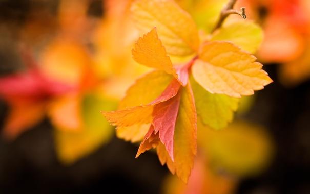 Фото обои листья, жёлтые, оранж