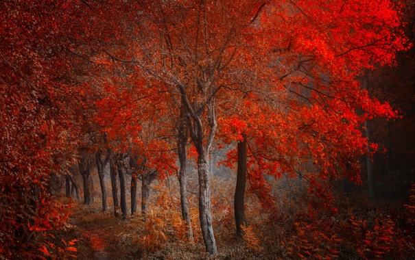Фото обои осень, лес, деревья
