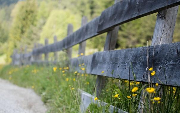 Фото обои дорога, цветы, забор