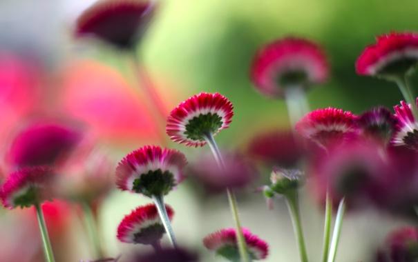Фото обои цветы, стебли, растения