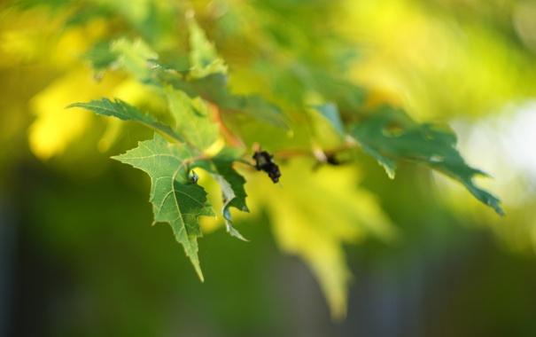 Фото обои зелень, листья, макро, свет, природа, дерево, ветка