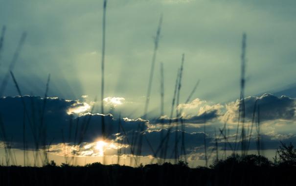Фото обои небо, цвета, облака, пейзаж, закат, природа, растения