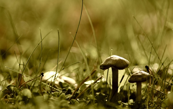Фото обои зелень, трава, макро, природа, земля, гриб, растения